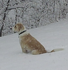 Brody in Snow